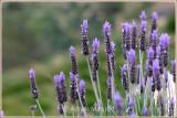 Spring_110409.jpg