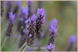 Spring_110410.jpg