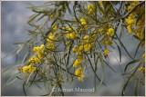 Spring_110411.jpg