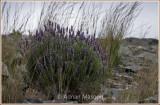 Spring_110412.jpg