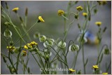 Spring_110413.jpg