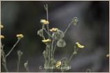 Spring_110415.jpg