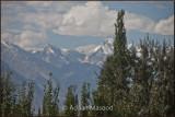 Trees and Peaks in background.jpg