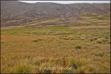 Deosai Plains after Kala pani (Black Water).jpg