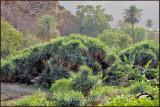 Dhy Ain Village, Al-Baha.jpg