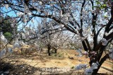Spring in Al-Hada.jpg