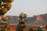 39- Desert View.JPG