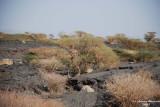 09-Lave Fields around crater.JPG