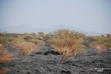 11-Lava Fields.JPG