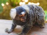 Symbio Zoo-1.jpg