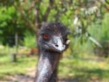 Symbio Zoo-1-8.jpg