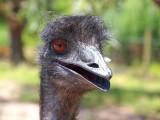 Symbio Zoo-1-9.jpg