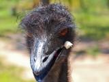 Symbio Zoo-1-12.jpg