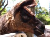 Symbio Zoo-1-14.jpg