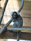 Symbio Zoo-16-11.jpg