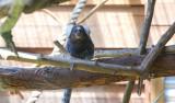 Symbio Zoo-16-20.jpg