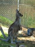 Symbio Zoo-16-22.jpg