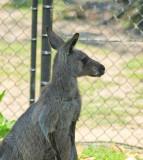 Symbio Zoo-16-26.jpg
