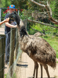 Symbio Zoo-16-28.jpg