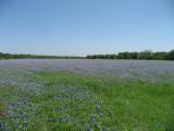 2012 Wildflowers