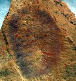 China Chengjiang Lower Cambrian Hazelia
