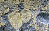 New York Ordovician sponge