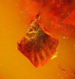 Leaf, 2 mm, in Burmese amber