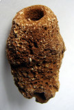 Cretaceous Farringdon sponge