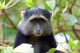 Tanzania Primates