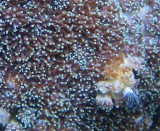 Coral and hand worm