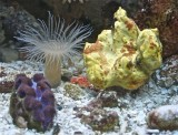 Clam, cerianthid, sponge and brittle star