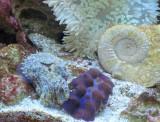 Cuttlefish, clam, ammonite and anemone