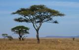 Serengeti Cats