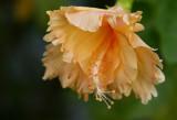 Garden 001sm.jpg