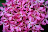 Garden 049sm.jpg