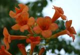 Garden 058sm.jpg