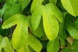 Garden 044sm.jpg