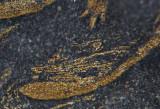 Detail of an exopod terminal oar