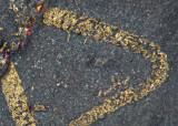Detail of Triarthrus antennae showing some fine setal hairs on proximal segments