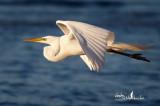 Florida Birding March 2011
