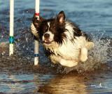 dogslideshow