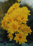 FLOWERS IN A GROCERY STORE  -  ISO 1600  -  NO POST-PROCESSING NOISE REDUCTION
