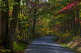 On an Autumn Road