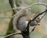 Only a Squirrel