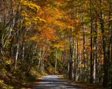 Best Autumn Road