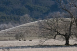 Morning Frost in Cades Cove