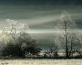 Morning Fog and Frost