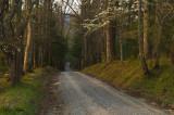 Spring Road at Dawn