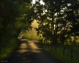 Morning Lane in Summer