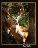 Wildlife in Cades Cove 12/19/05